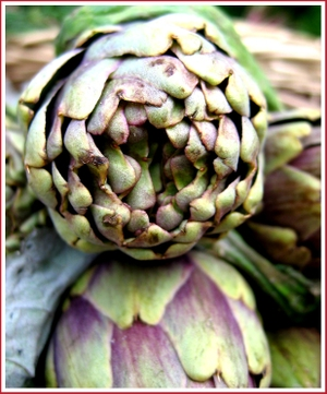 20070407_artichokesingle