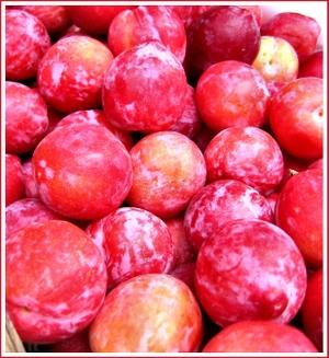 20070407_plums