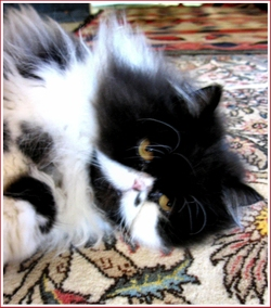 20061021_stoningtoncat