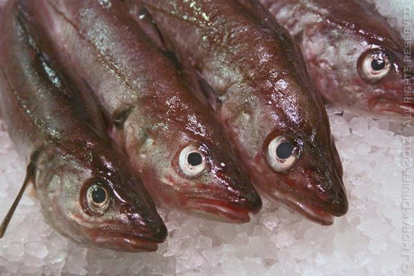 GoteborgFeskerforkaFreshFish © J Horak-Druiff 2012