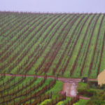 Waterkloof Vineyards 2 © J Horak-Druiff 2012