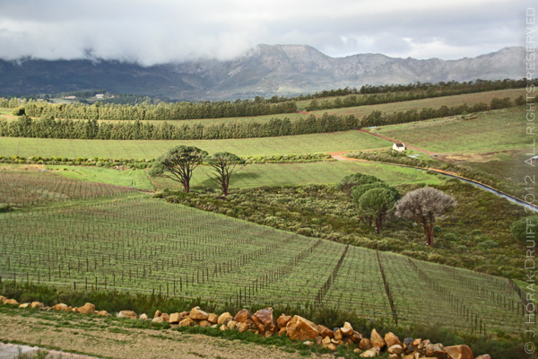 Waterkloof Vineyards 3 © J Horak-Druiff 2012