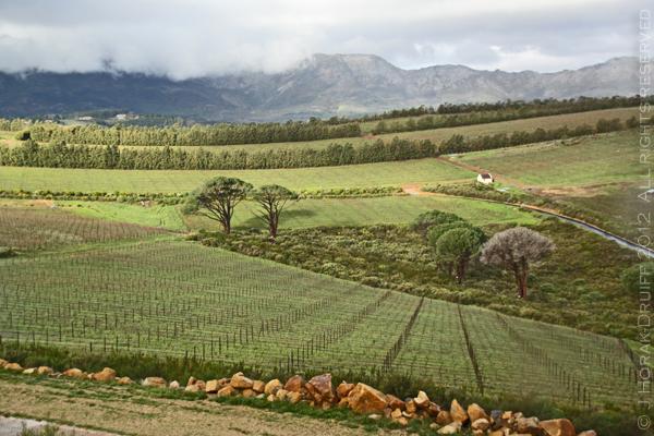 Waterkloof Vineyards 3 © J Horak-Druiff 2012