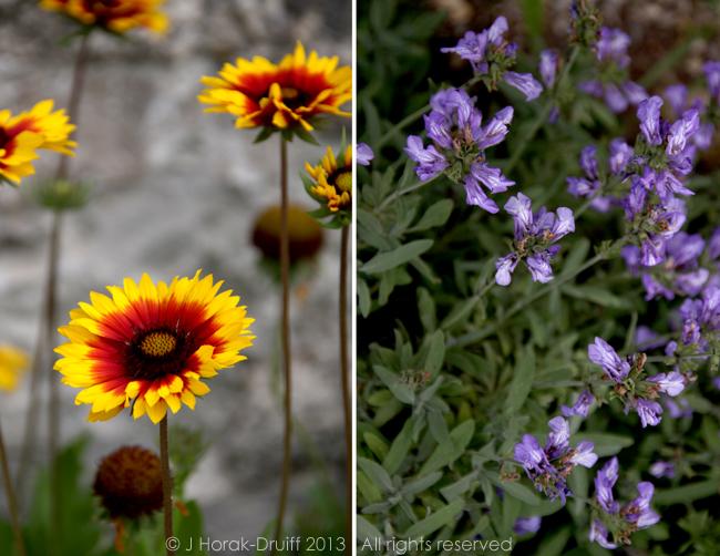 BrantesWildflowers1 © J Horak-Druiff 2013