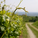 Venicefoto 2014 workshop – creativity flowing on the Strada del Prosecco