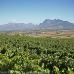 Seven South African wine estates you need to visit