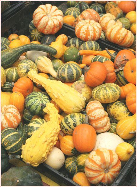 WTSIM-gourds