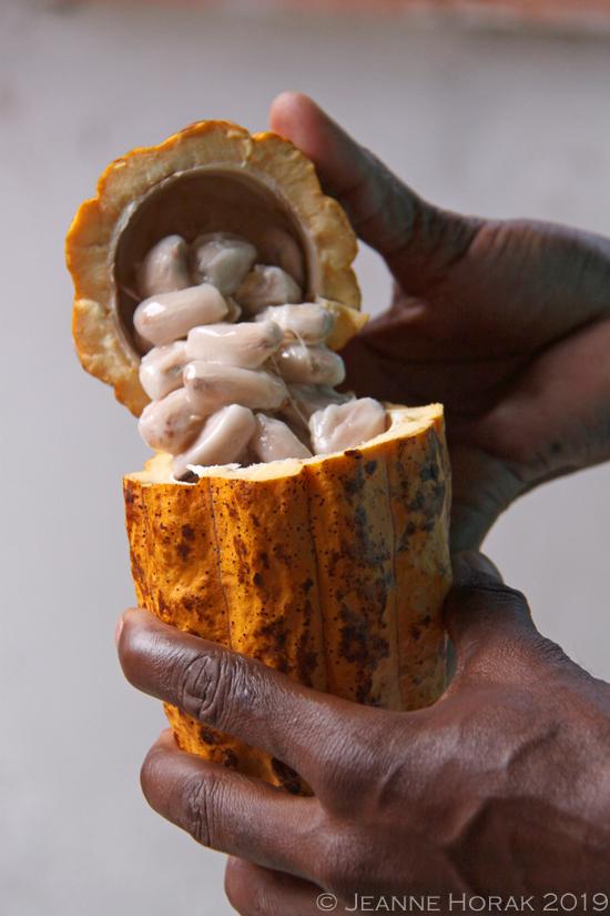 Grenada-cocoa