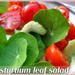 Nasturtium leaf salad