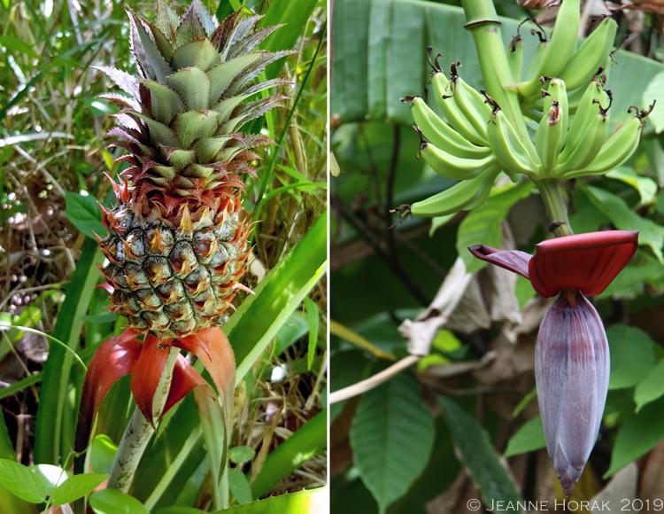 Grenada-Chocolate-Co-banana-pineapple © J Horak 2019