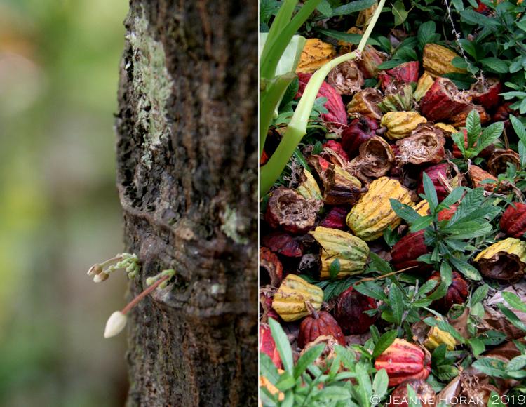 Grenada-Chocolate-Co-cacao © J Horak 2019